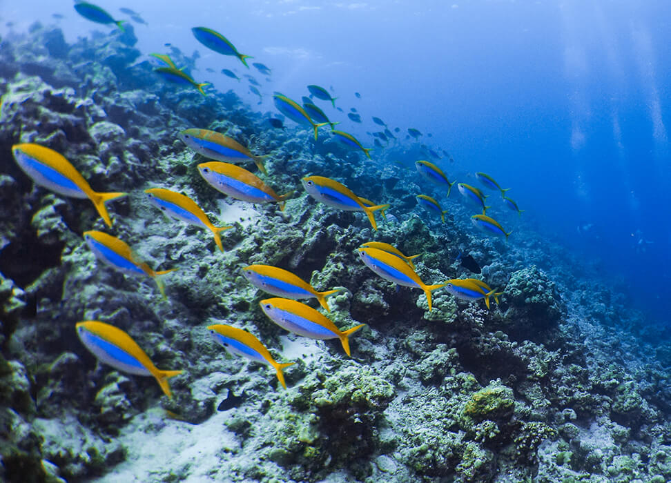 The marine life of Baa Atoll is breath taking