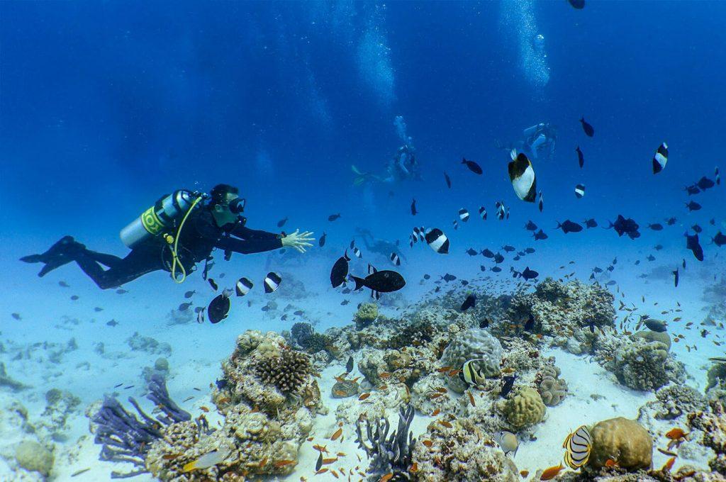 Diving in Unesco Biosphere