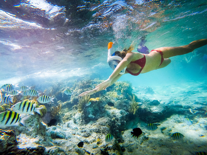 Snorkeling Excursions with Snorkel Guides