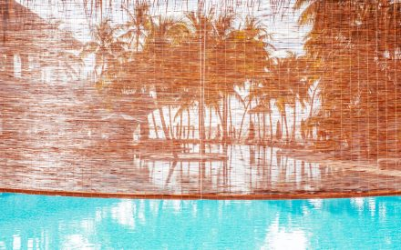 pool with palms