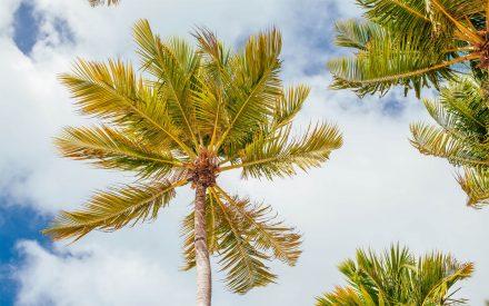 Las hojas de las palmeras se mueven con el viento