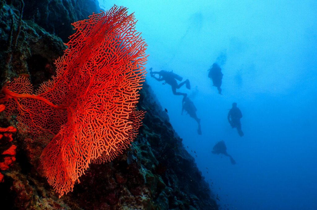 Diving in Unesco Biosphere