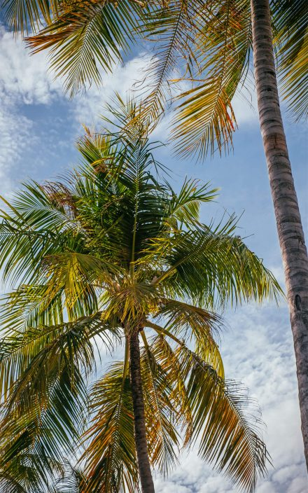 maldivian palms in paradise