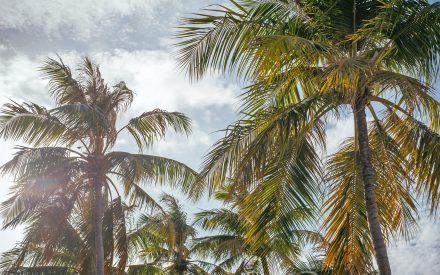 white palm beach maldives