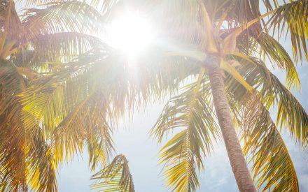 white sandy beach at finolhu with palms